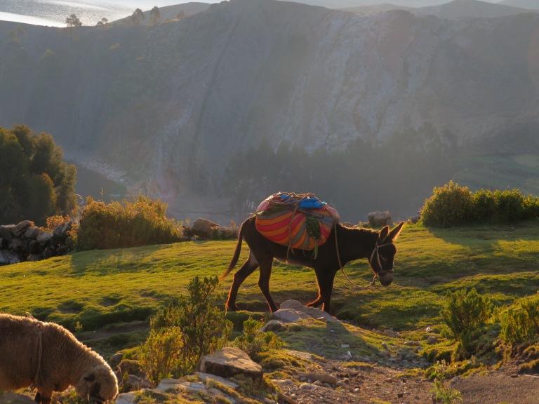 Donkey's Isla del Sol HB